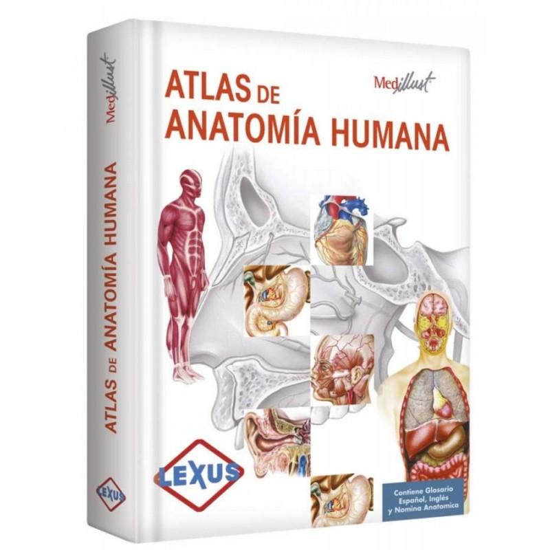 Texto sobre anatomia humana